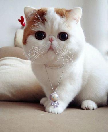 421c2ee94f1c5ecc024bf23edfd76b5b--snoopy-cat-cute-cats