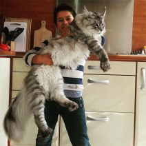 maine-coon-cats-24__605