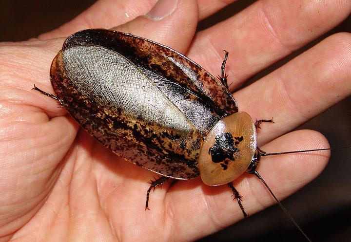 Roach-on-hand-x720w