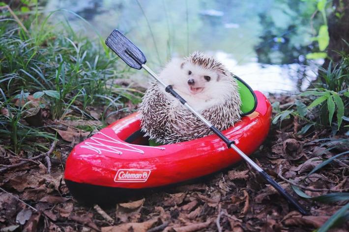 07-adorable-hedgehog.w710.h473