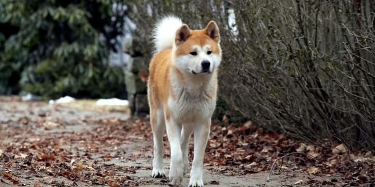 film__16489-hachi-a-dog-s-tale--hi_res-84cc81c9